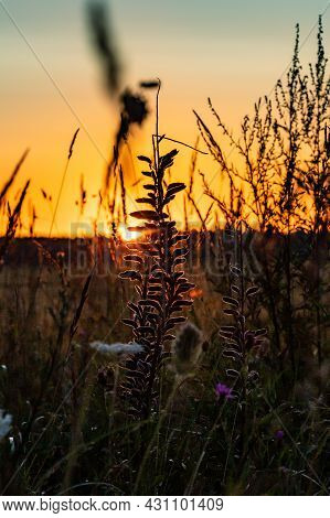 Vertical Photo Of Sunrise Over The Meadow. Sunset In The Field With Grass Silhouette. Sunrise At The