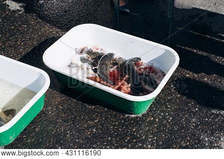 Live, Fresh Fish In Container Outdoors. Street Fish Market