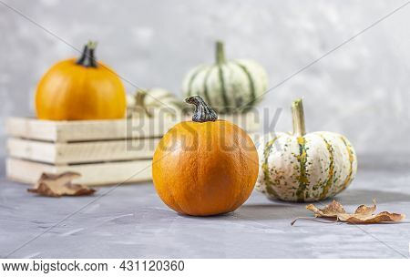 Fresh Beautiful Pumpkins. Traditional Dinner Thanksgiving. Copy Space