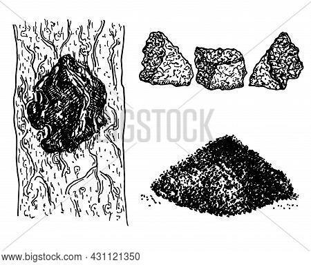 Chaga Mushroom Inonotus Obliquus Set. Medicinal Plant. Natural Chaga Mushroom Pieces Isolated On Whi