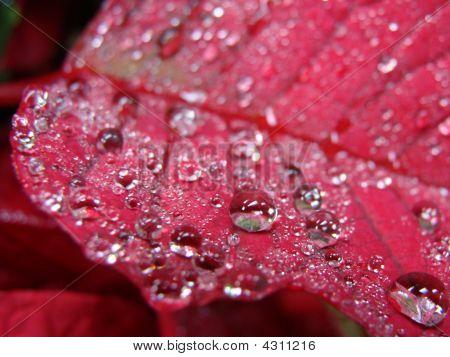 Dew Leaf