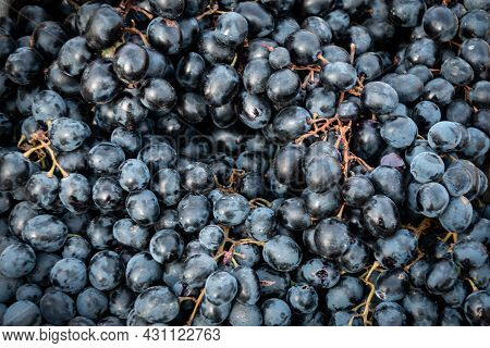 Blue Grapes With A Stalk. Dark Grapes. Close-up. Grapes. Winemaking. Grape Background.
