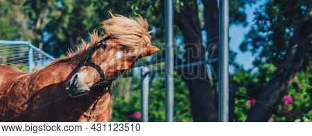 L Banner Close Up View Beauty Brown Horse Pony Head. Smile Emotion Look At Camera. Funny Humor Joy M