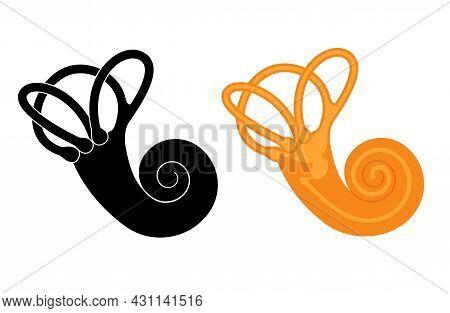 Vestibular Apparatus Anatomy. Semicircular Canals, Membranous Ampullae, Utricle, Saccule And Cochlea