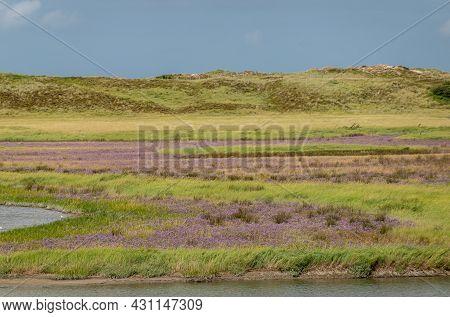Knokke-heist, Flanders, Belgium - August 6, 2021: Zwin Nature Reserve. Purple Zwinneblommen (flowers