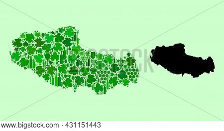 Vector Map Of Tibet. Collage Of Green Grape Leaves, Wine Bottles. Map Of Tibet Collage Designed From