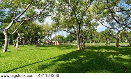 Green Grass Lawn Garden By A Lake Decorate Greenery Ficus Trees Bridge On Background In Good Care Ma