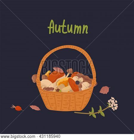 Basket With Wild Mushrooms. The Inscription Autumn, In A Circle Of Foliage, Mushrooms, Basket, Natur