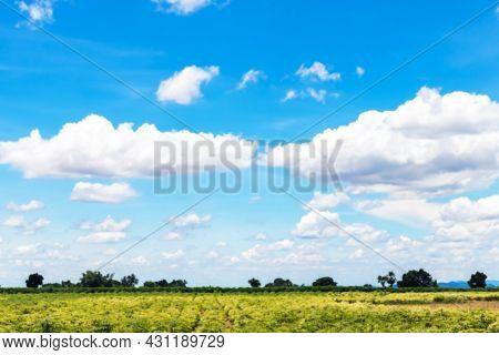 Blurred Cassava Plantation Land And Blue Sky View For Background, Cassava Or Yucca Field, Tapioca Fa