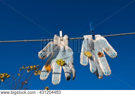 A Pair Of White Work Gloves, Fastened With Two Clothespins, With Blue Pimples And Leaves Stuck After
