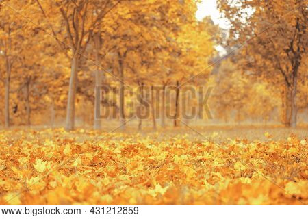 Beautiful Autumn Colorful Foliage In The Park. Falling Leaves Natural Background