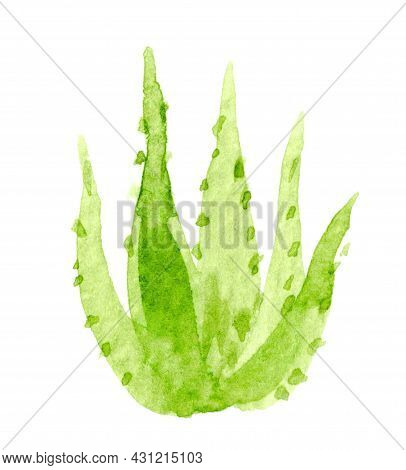 Aloe Vera Watercolor Hand Drawn Paint, Aloe Leaf Isolated On White, Aloe Vera Illustration