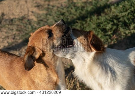 Two Playful Dogs Teasing Each Other, Domestic Animal Friendship