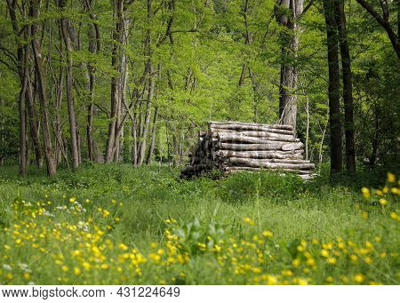 Woodpile In A Green Forest Environment, Forestry, Trunks,