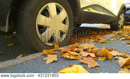 Car Wheel On Road. Yellow Dry Fallen Maple Leaves On Asphalt. Golden Autumn Street. Travelling. Driv