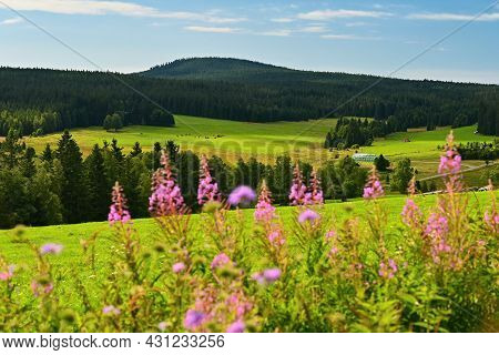 Sumava - Beautiful Landscape Of Summer Nature In The Mountains. Extensive Mountains On The Borders O