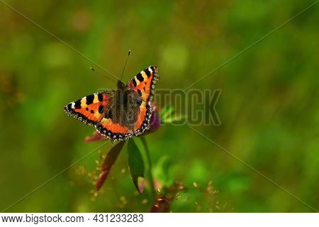 A Butterfly On A Thistle. Beautiful Natural Colour Background.