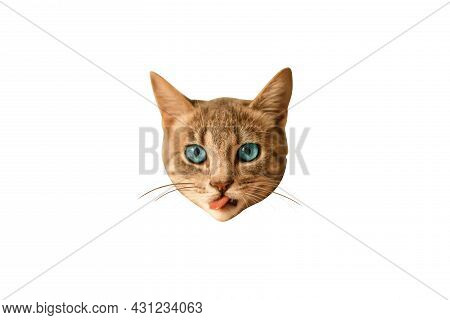 Adorable Cat Face On A White Background . World Cat Day. Minimal Collage Fashion Concept