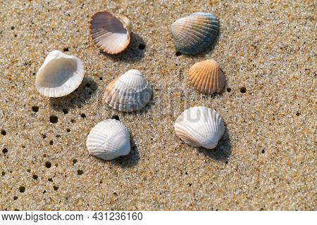 Closeup Of Small Sea Shells Lying On A Wet Beach Sand Made Even By Ocean Tide. Summer Seaside Holida