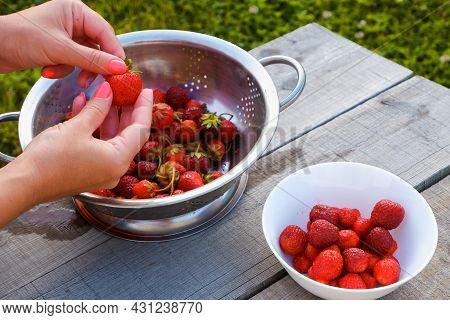 Organic Strawberry Breakfast. A Girl Washes Strawberries From Her Garden For Breakfast. Close-up Vie