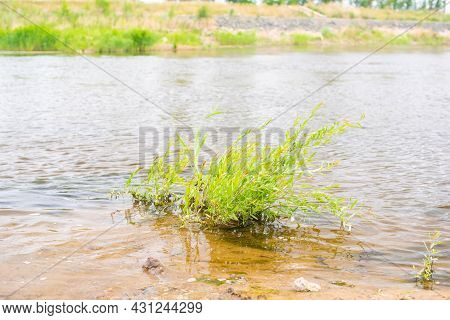 The Grass Grows In The Middle Of The River