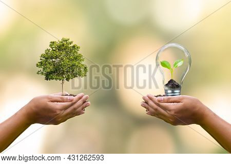 Human Hand Planted Trees And Small Trees Growing In Light Bulbs On Human Hands To Conserve Earth Day