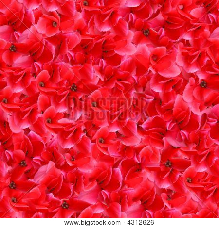 Red Flowers Seamless Pattern