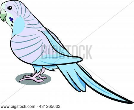 Pigeon Standing With Shadow. Grey Bird. Birds From Different Parts Of World. Common Birds. Bird Icon