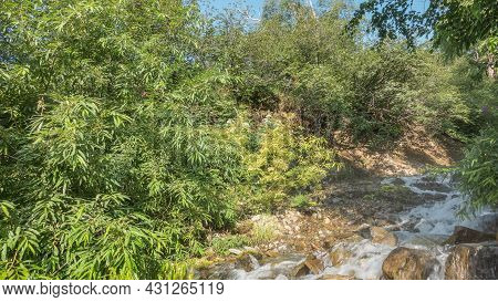 A Mountain Stream Flows Down Over The Rocks. The Water Is Bubbling, Foaming. The Green Branches Of T