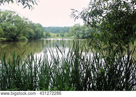 Summer Green Forest Pond Landscape In Cloudy Weather. Forest Pond In Summer. Summer Green Forest Pon