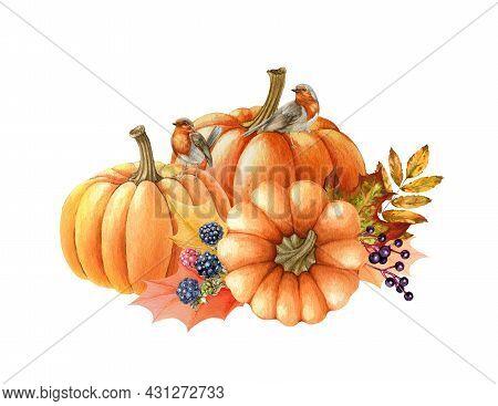 Pumpkin And Birds Autumn Arrangement. Watercolor Illustration. Hand Drawn Rustic Festive Decor. Robi