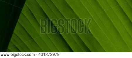 Full Frame Horizontal Background Of Green Banana Leaf Showing Texture