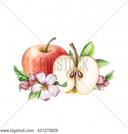 Apple Fruit And Flower Arrangement. Watercolor Floral Illustration. Red Juicy Apple, Half Cutted And