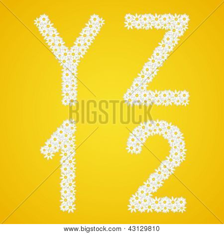 Letters Yz And 1&2 Figures Composed From Daisy Flowers. Complete Alphabet In The Gallery.