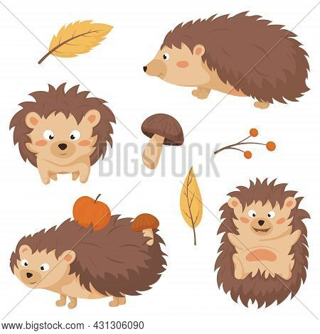 Collection Of Images Of Cute Children Of Forest Hedgehogs With Apples And Mushrooms In Needles. A Tw