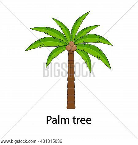 Palm Vector, With The Inscription Palm Tree. Palm Tree With Coconuts Isolated On A White Background