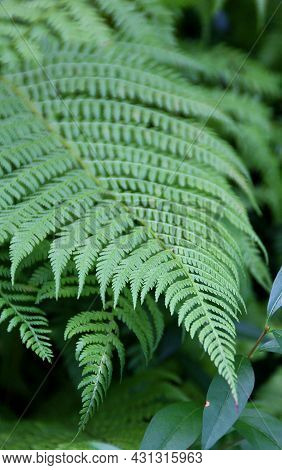 Fern Leaf, Green Forest Plants, Fern In The Forest, Green Leaves, Wild Nature