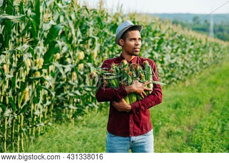 Harvest Time Agribusiness, Young Black Farmer With Hat Holds Corn Cobs In His Arms, Looks Into The D