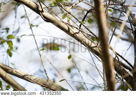 Plant Limbs And Green Leaves With A Light Blue Background