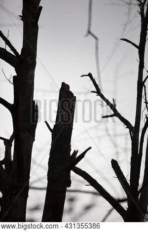 Creepy Trees Jutting Into A Gray, Overcast Sky