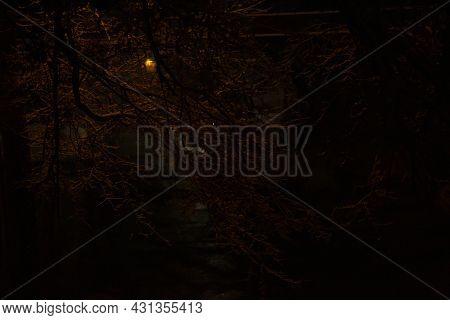 Street Light Casting Orange Hue On Snow-covered Tree Limbs On A Dark Night