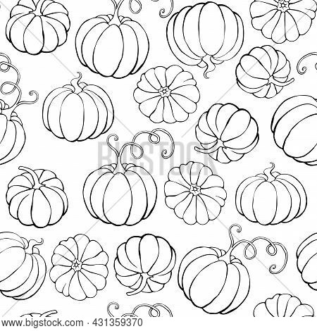 Vector Seamless Pattern With Outline Pumpkins In Doodle Style. Halloween Or Thanksgiving Background