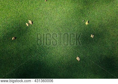 Yellow Leaves On Green Grass The Golf Course. High Quality Photo