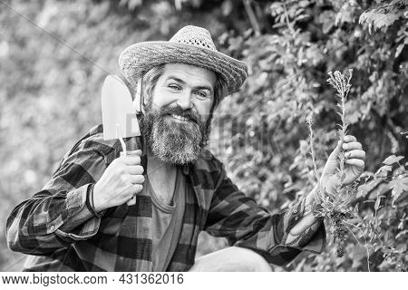 Gardeners Hands Plant Flowers In Backyard. Gardener Planting Flowers With Garden Trowel. Farmer Plan