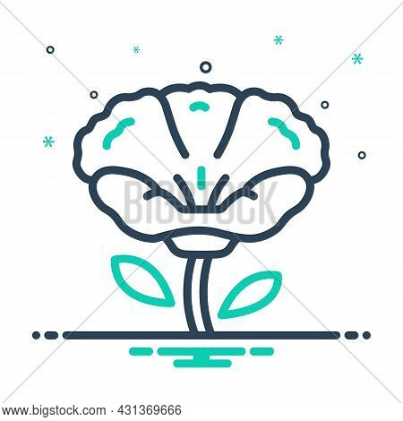 Mix Icon For Poppy Papaveraceae Mawseed Opium-poppy Breadseed Horticulture Celandine Natural Flower
