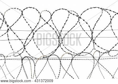Barbed Wire Isolate. Coils Of Steel Barbed Wire On White Background