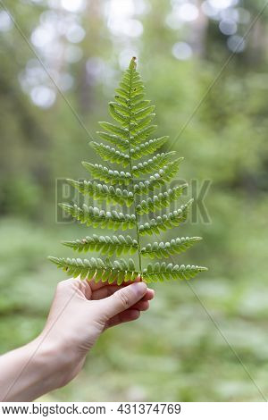 Environmental Protection, Forest And Nature Conservation Concept. Fern On A Womans Palm. Fern Leaf W