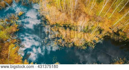 Spring Season. Aerial View. Young Birches Grow Among Small Marsh Bog Swamp. Deciduous Trees With You