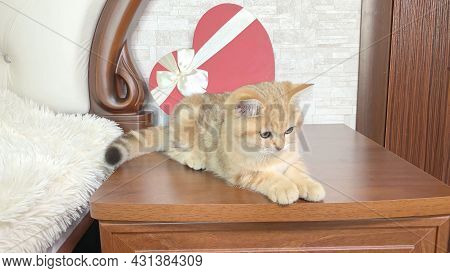 Little Red Ginger Striped Kitten Sitting Near Red Heart Shaped Box At Bedside Table. Adorable Cat