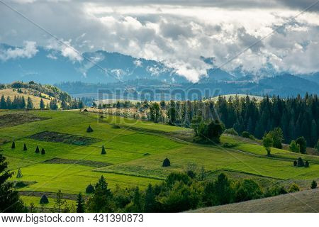 Mountainous Countryside In Early Autumn. Trees And Grassy Meadows On Rolling Hill. Nature Scenery Wi